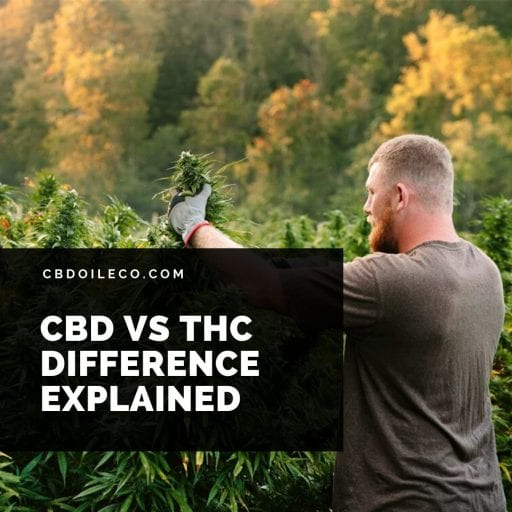 CBD Vs THC – The Difference Explained