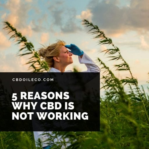 5 Reasons Why CBD Oil Is Not Working