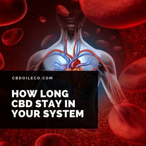 How Long CBD Oil Stay In Your System?