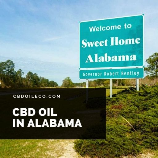CBD Oil Alabama – Where To Buy?